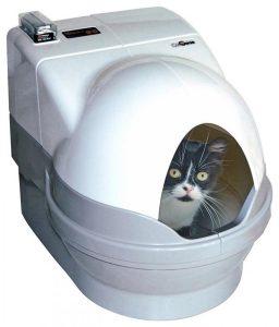arenero para tu gato
