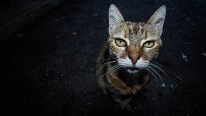 podemos ayudar a tu gato en la vejez